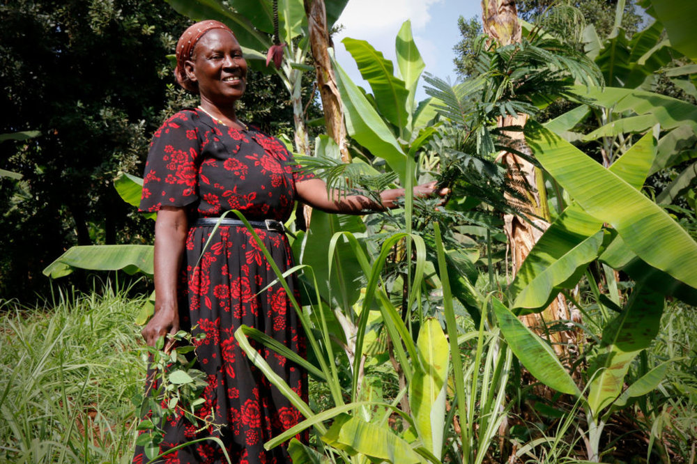 Purity Gacaga's small dairy farm in Embu, Kenya, is a model of climate change adaptation. All photos by Tim McDonnell.