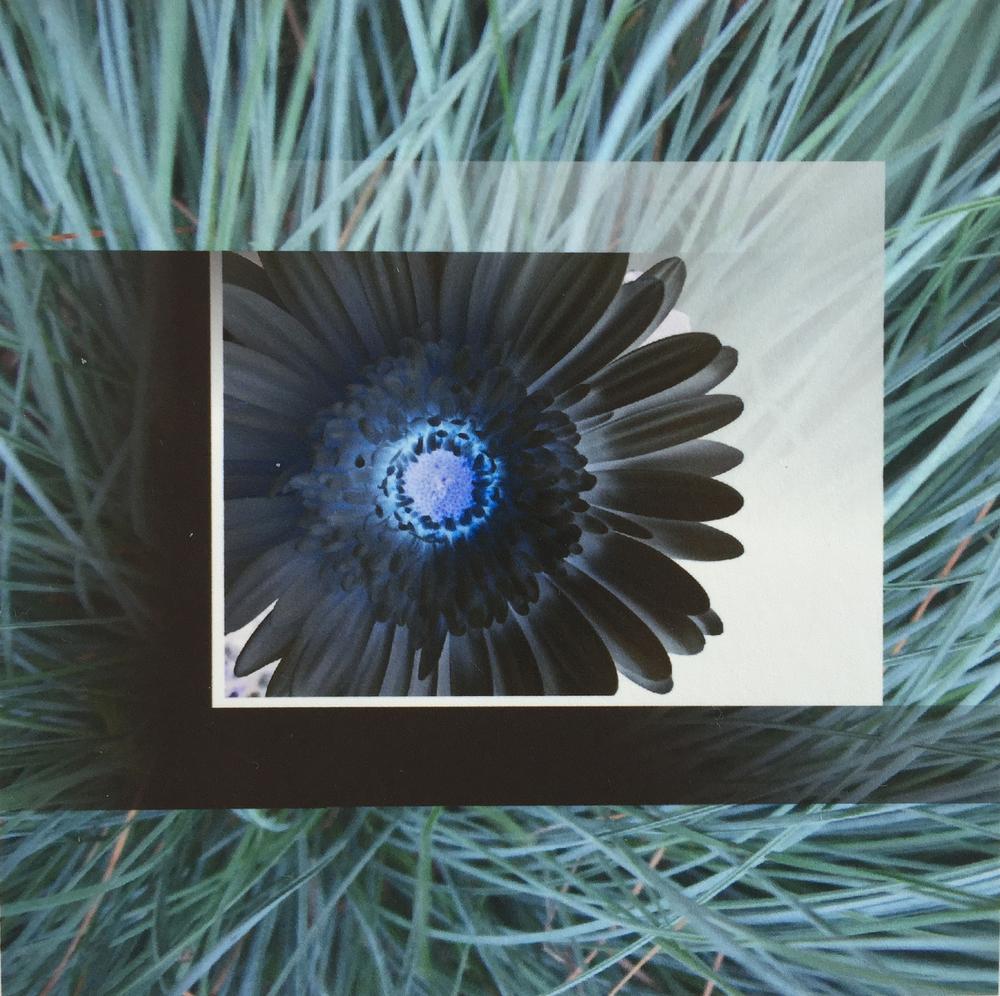 20160330-gerbera-daisy-collection-2-jpg.jpg