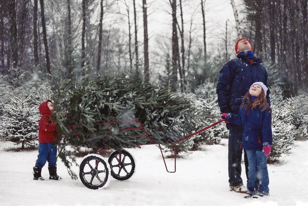 20171215-christmas-tree-hunt-snowflakes-jpg.jpg