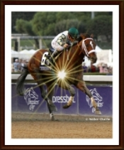 Mucho Macho Man Shines in Breeders' Cup Win.