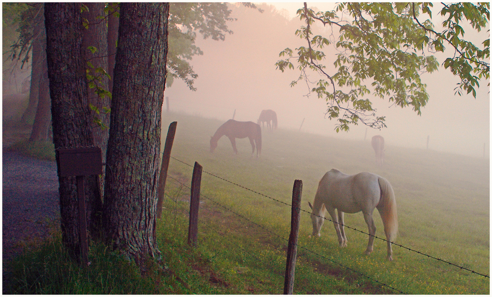 Cades Cove, Great Smoky Mountains N.P. Tennessee