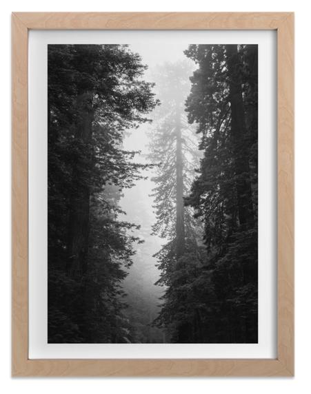 Redwood Morning by Kamala Nahas
