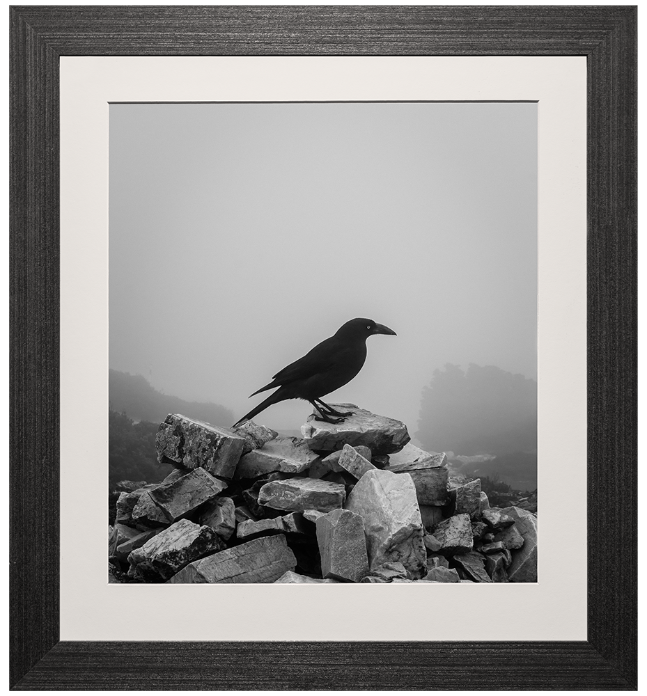 The Currawong - Frame Size: 20