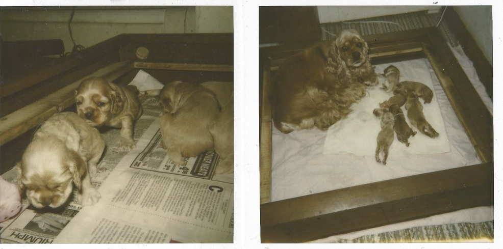 Holly's first litter -1992