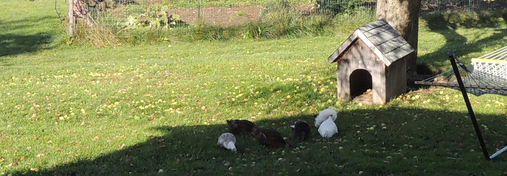 duckdog.jpg