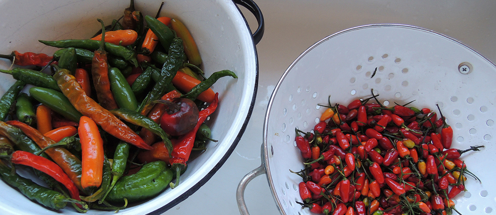 hotpeppers.jpeg