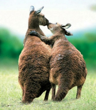 animals-in-love19.jpg