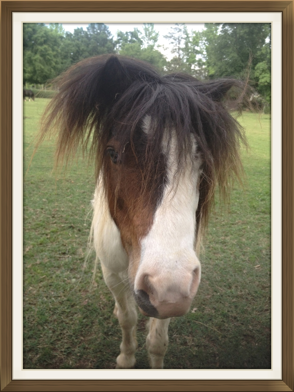 Nemo, my miniature horse who reminds me of Pig Pen.