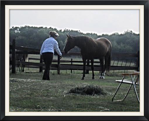 Engaging Serina, Barb Fenwick's Paso Fino