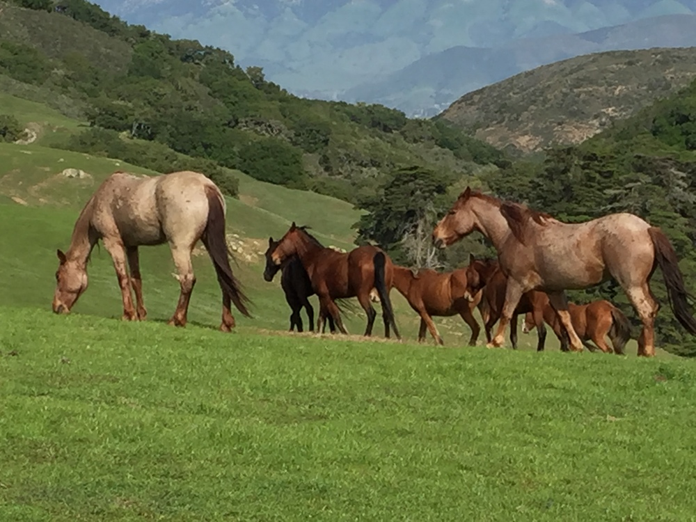 An example of horses sharing territory with one another    Photo taken at Return To Freedom Wild Horse Sanctuary & Preservation