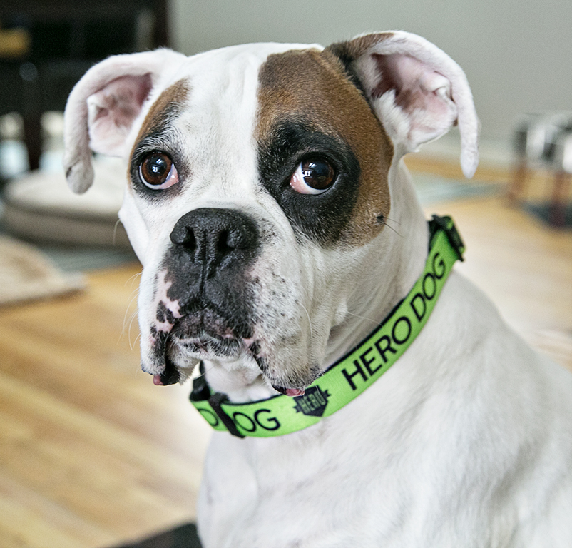 HERO collar in green