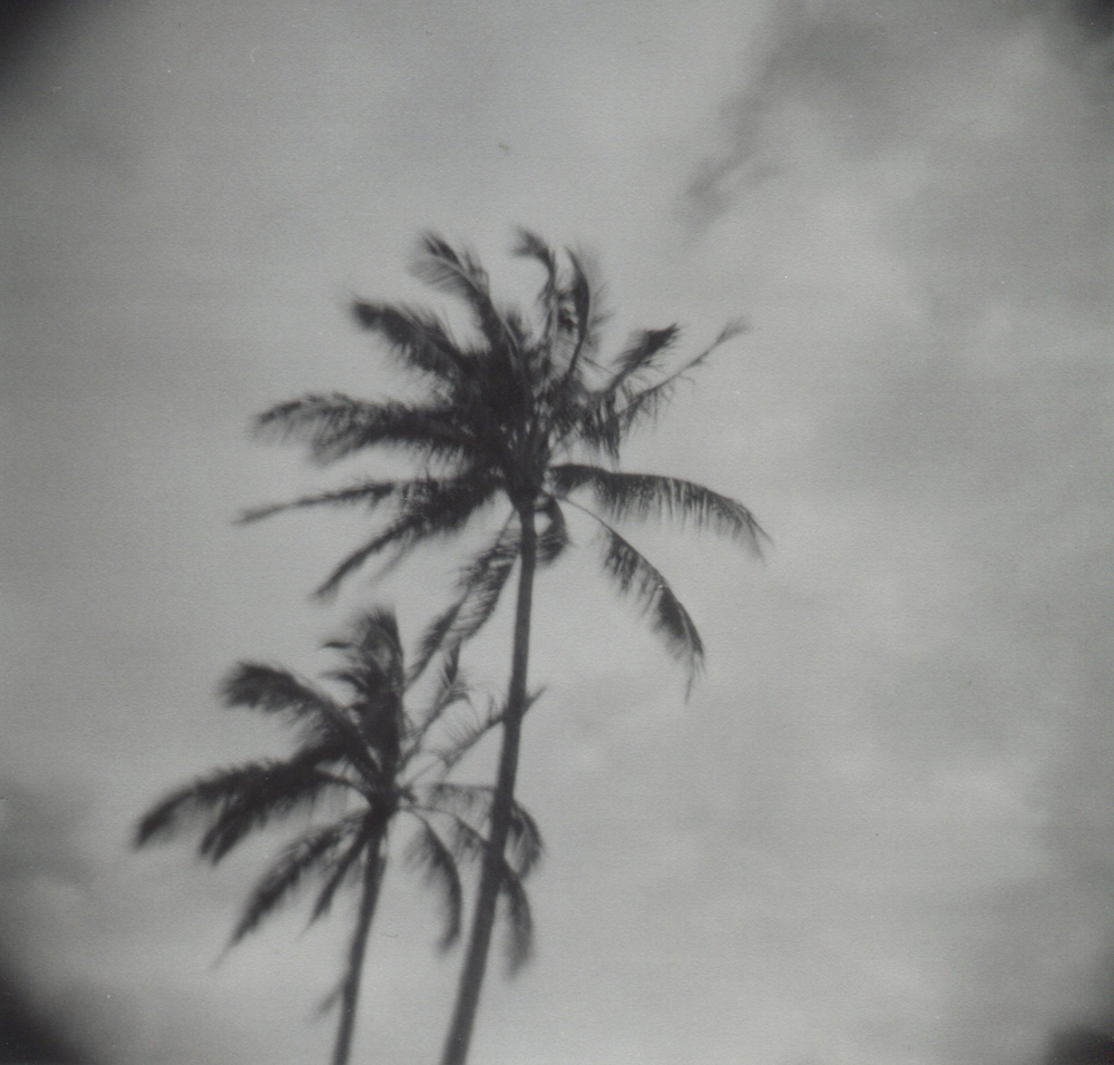 PalmTrees_Holga.jpeg