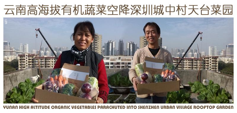 云南高海拔有机蔬菜空降深圳城中村天台菜园(小).jpg
