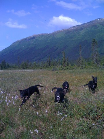 pups in meadow.jpg