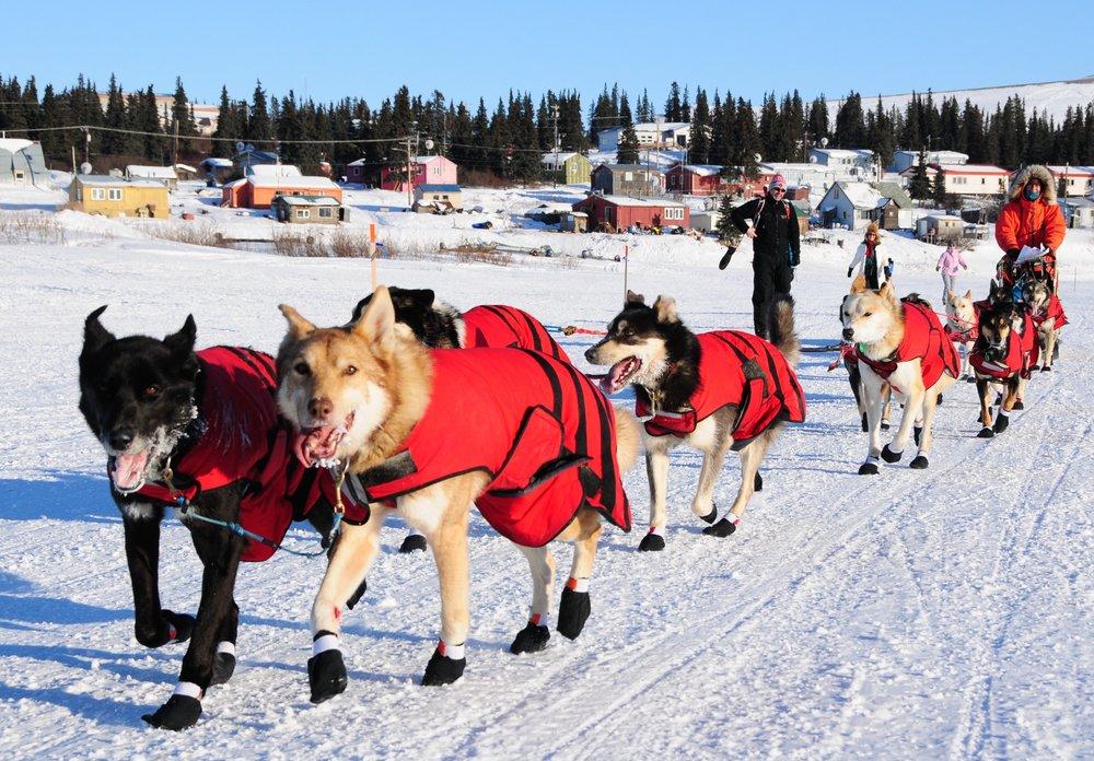Iditarod Slideshow 1 (12).jpg
