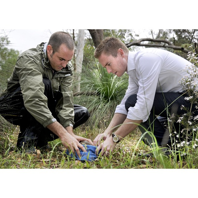 Today I succeeded in introducing new biodiversity laws in Parliament – something governments have been trying to do since the 1980s! The new laws will improve our ability to conserve special plants and animals while also providing streamlined development approvals.