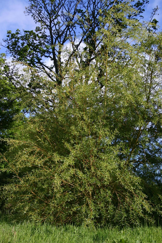 trees 4.jpg