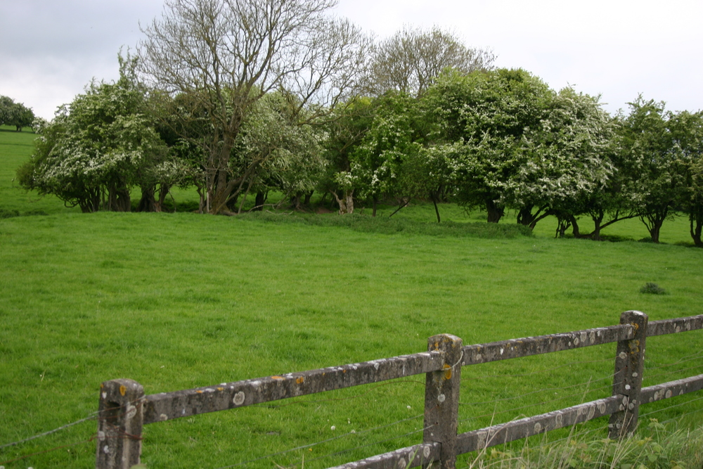 kildare field and fence.jpg
