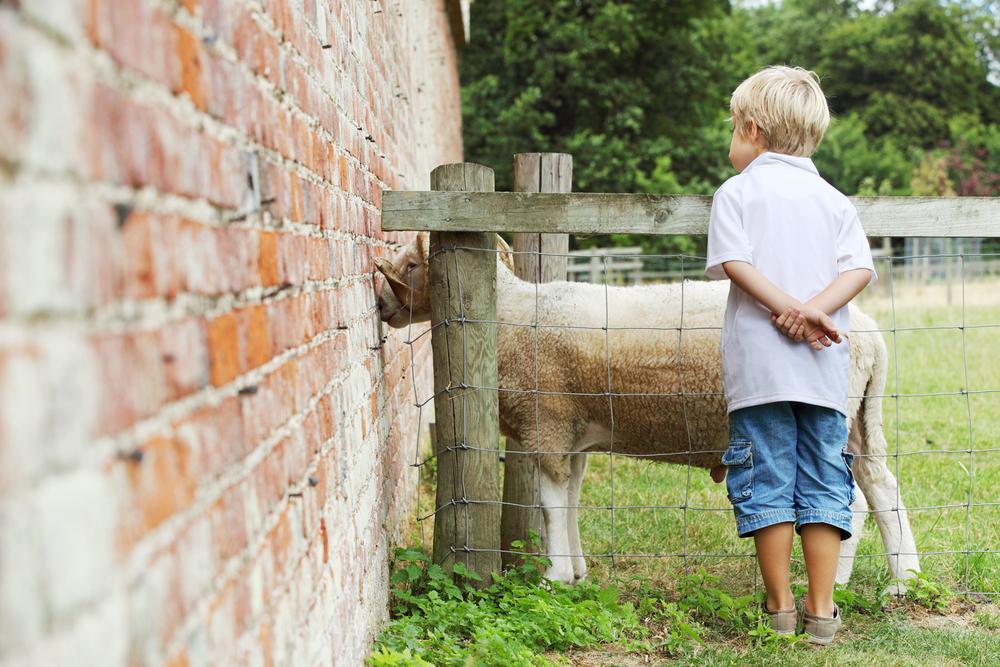 Wimpole Farm-240.jpg