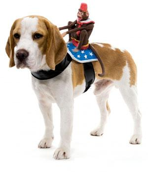Dog-Circus-Monkey-Rider-Costume.jpg