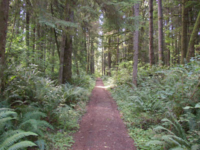 Typical trail through Redmond Watershed. Photo courtesy of The City of Remond website.