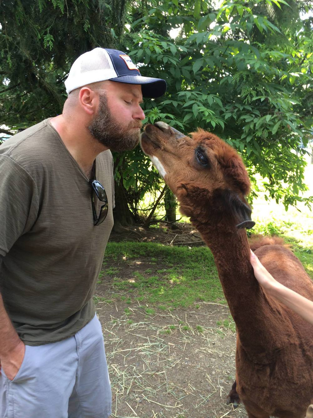 As promised...llama kissing!
