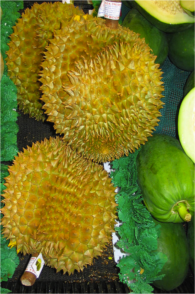 """Durian,"" by Amanda. Licensed by Attribution-NonCommercial-NoDerivs 2.0 Generic (CC BY-NC-ND 2.0)."