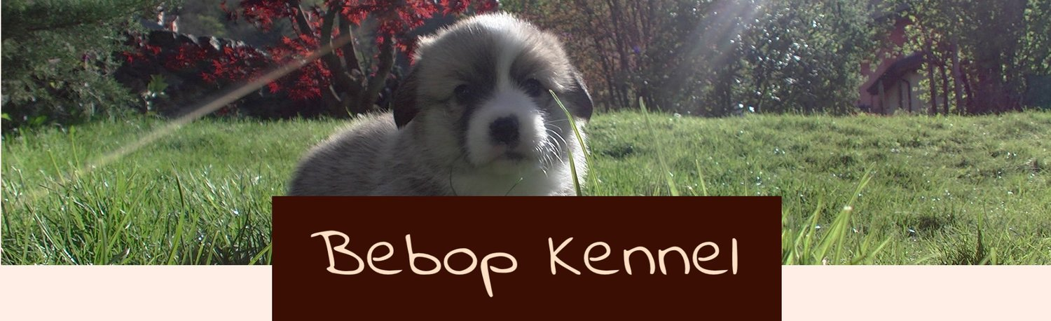 Bebop Kennel