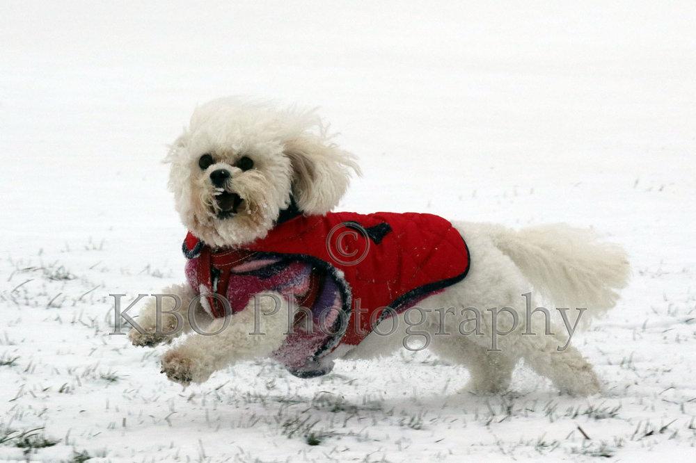 MNT1-22-02-18-RUSHDEN-SNOW-1-14).jpg