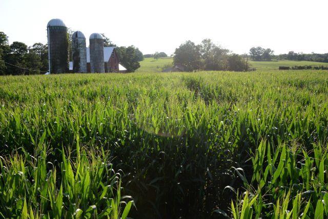 Wright Family Farm - Warwick, NY