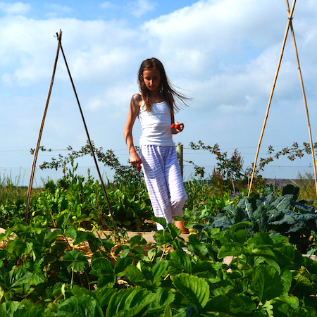 GROWING AND HARVESTING - tend to the plants in the food garden and polytunnel and harvest fresh ingredients for the kitchen team.