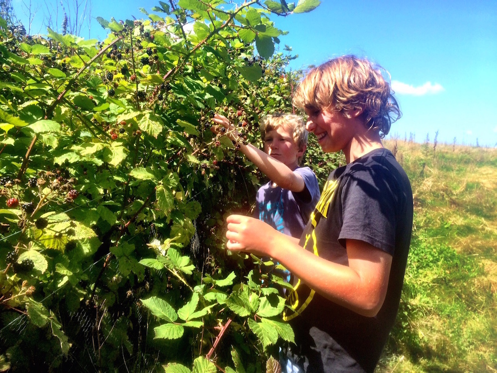 picking (and grazing on!) fresh blackberries for dessert