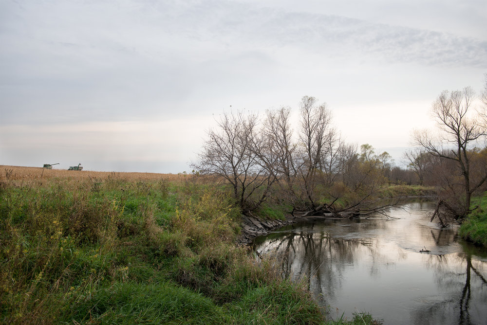 East fork Iowa River - 2015   Uprooted