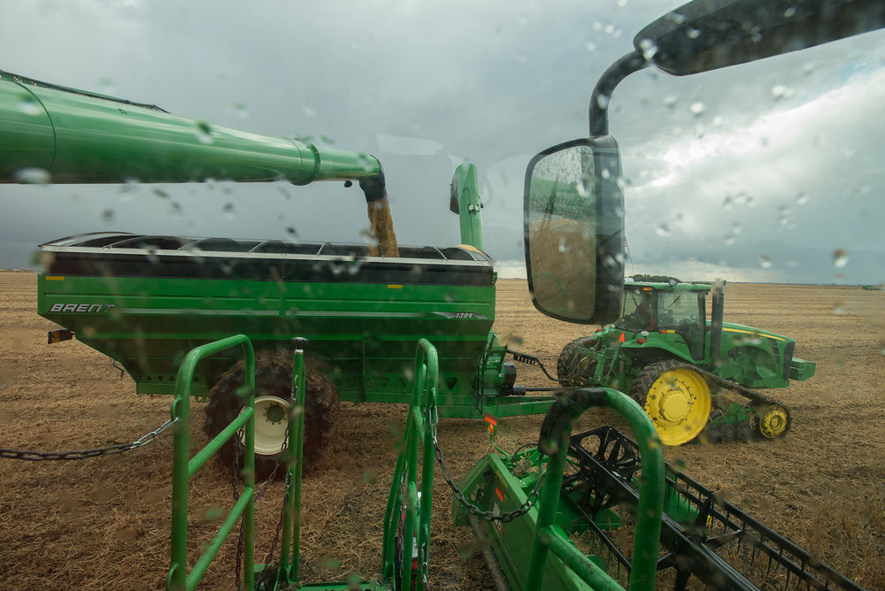 Combining beans, 2013