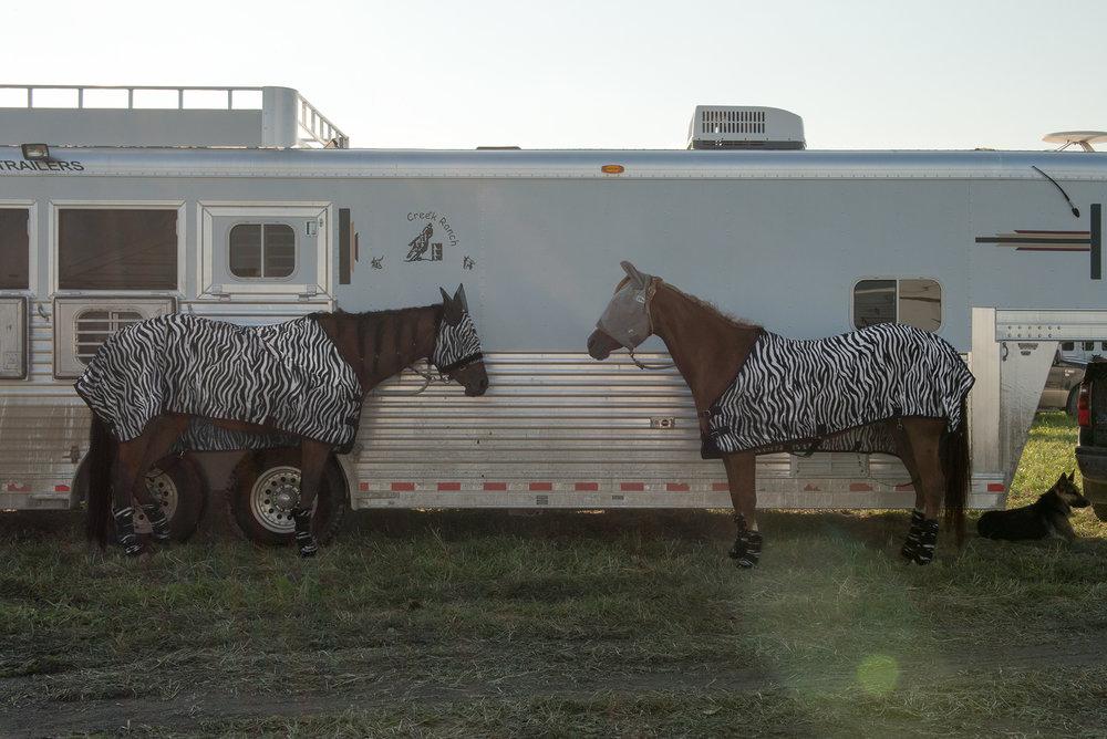 zebra_horse.jpg