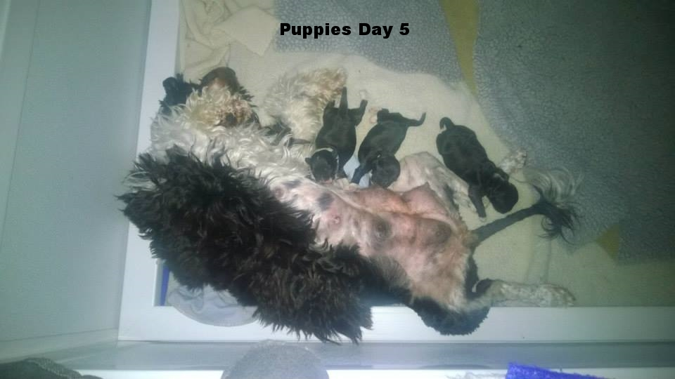 Puppies Day 5.jpg