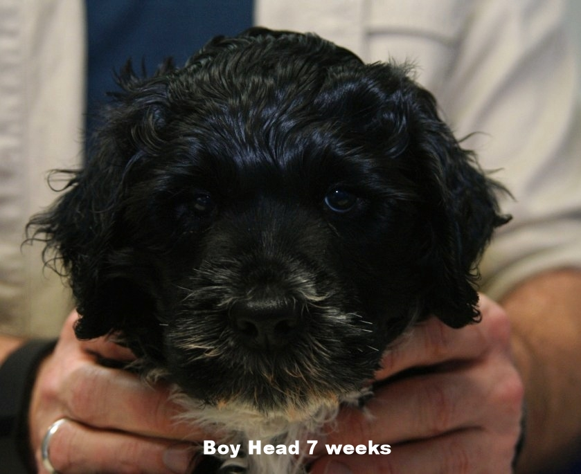 boy head 7 weeks.JPG