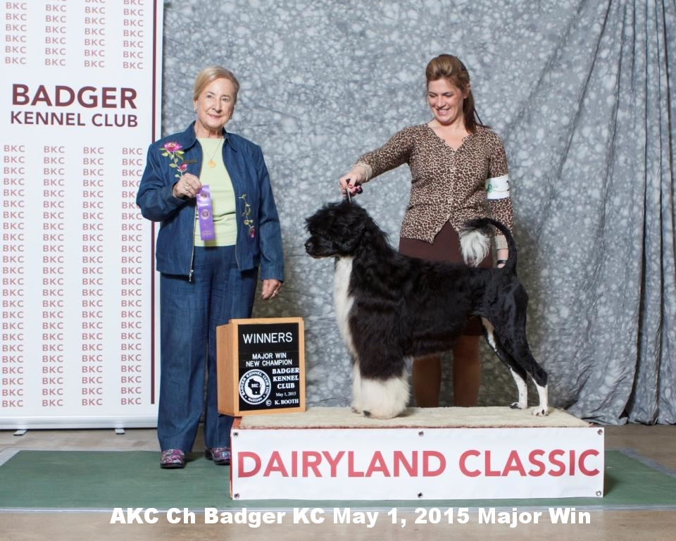 Minnie AKC Ch Photo Badger KC May 1, 2015