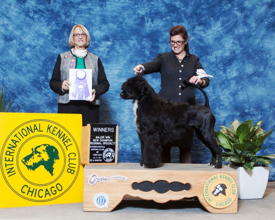 Cricket AKC Champion Photo