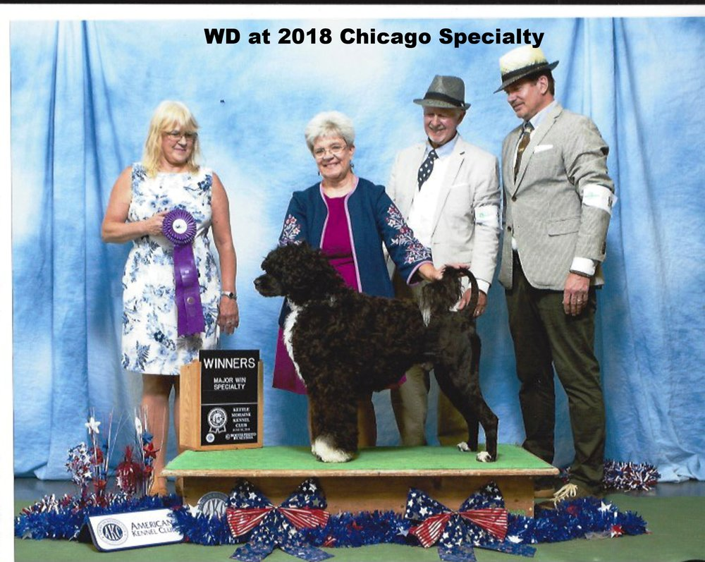 2018 Chicago Reg PWD Club Winners Dog
