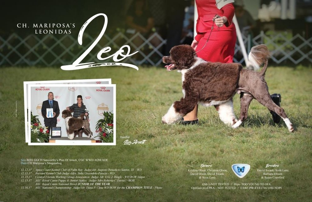 Copy of Leo at RC and AKC Nationals ad.jpg