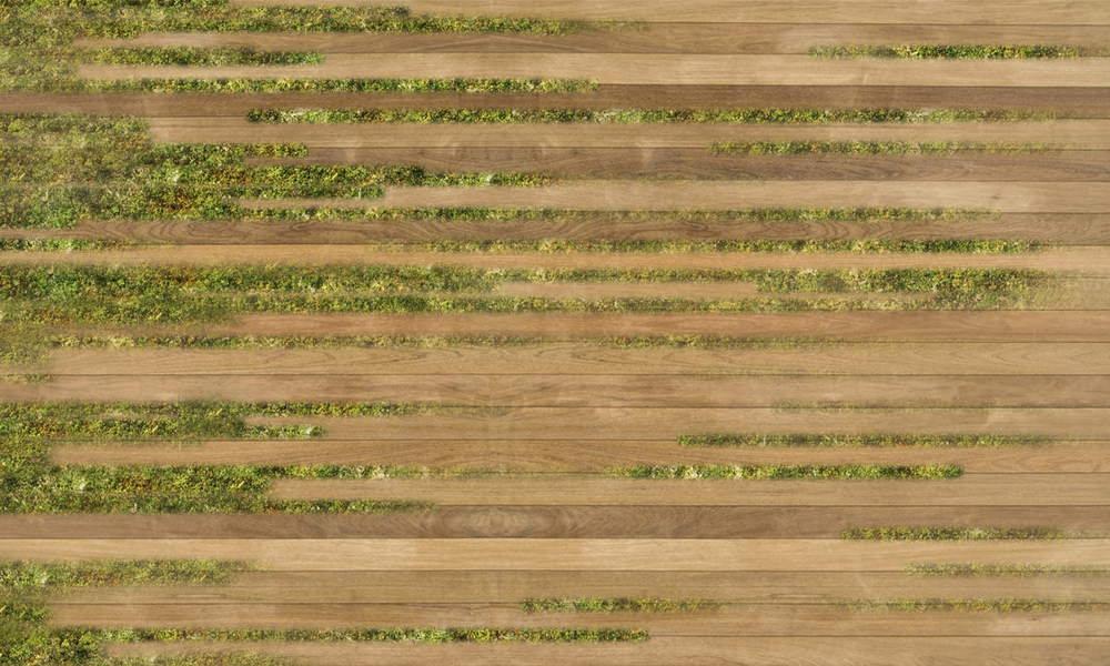 gradient wood grass.jpg