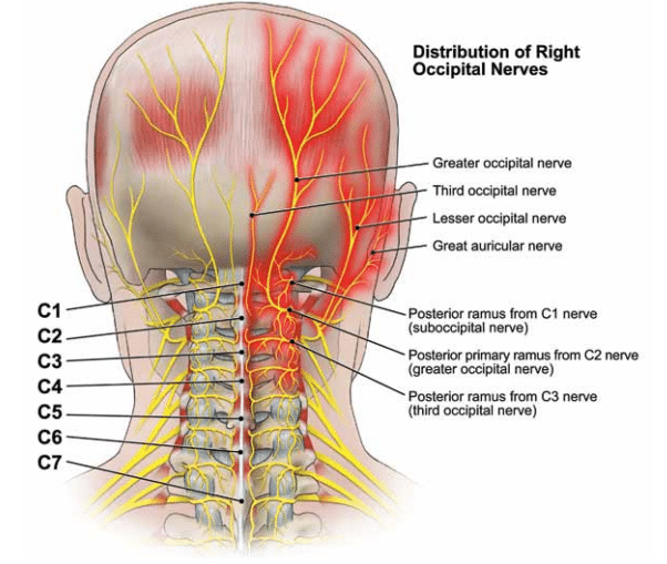 https://www.completepaincare.com/wp-content/uploads/2015/11/Occipital-neuralgia-nerves.png