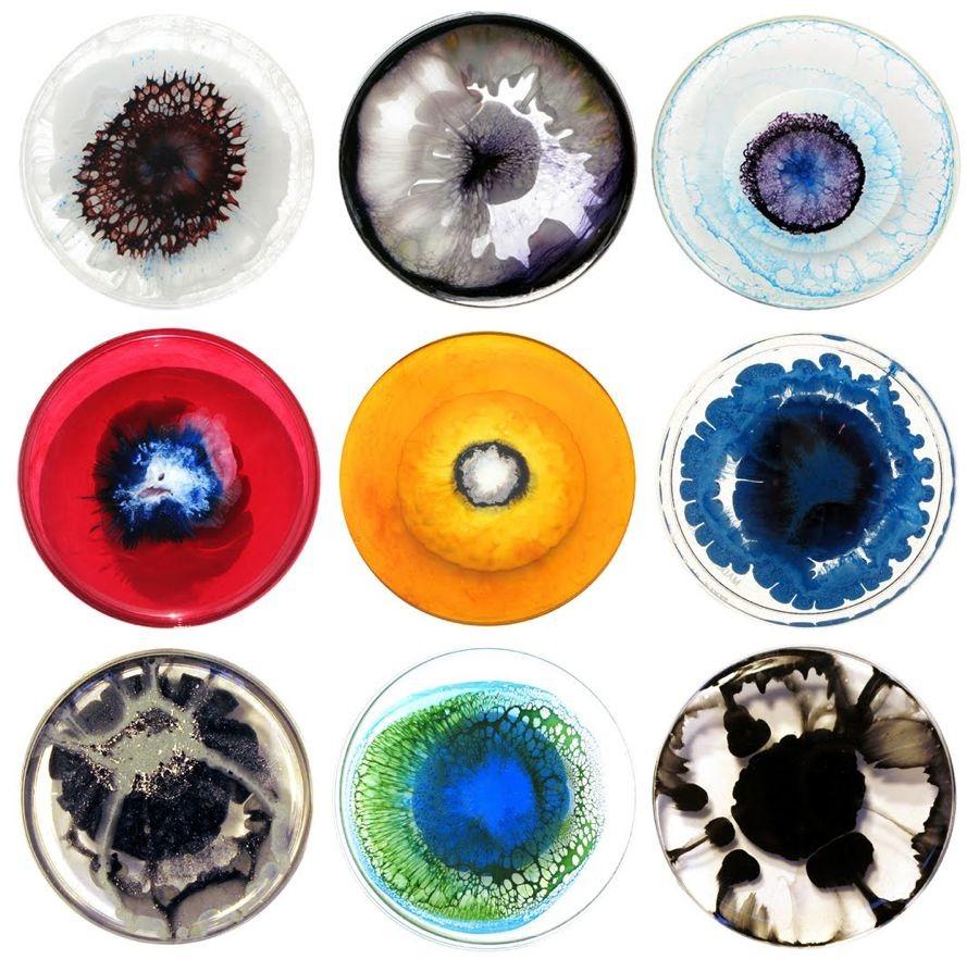 2headedsnake :      culturecompass.co.uk         petri dishes  by Klari Reis