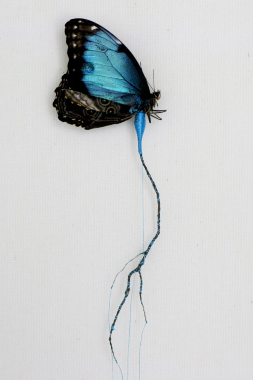 "Anne Ten Donkelaar - Broken butterflies repaired with new wings and bodies. 2011, ""Blauwe spinner"". The body of this butterfly is made of thread (w:18 h:50 d:5.5 cm)"