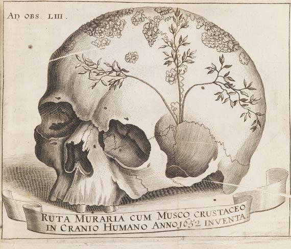 """blackpaint20: FromMiscellanea curiosa. 1671 Miscellanea curiosa medico-physicaacademiae naturae curiosum. Jg. II (1671). Mitgest. Frontisp., gest. Porträt und 39 tlw. gefalt. Kupfertafeln.Jena, E. Fellgiebel für S. Krebs 1671. Pgt. d. Zt. 4to. 33 Bll., 480 [recte 482] S., 15 Bll., 35S., 10 Bll. Kirchner 3176. - Krivatsy 7936.1. - Erste Ausgabe. - Zweiter Jg. der umfangreichen Jahrbücher der Leopoldinischen Akademie der Naturforscher. -Mit dem AppendixAddenda curiosa omissorumfür Jg. I. Über medizinische, botanische und zoologische Themen. - Etwas gebräunt und tlw. leicht stockfleckig, die plastischen Tafeln jedoch nicht betroffen. VDeckel geworfen. - Exemplar aus der Bibl. des Aug. Willh. E. Th. Henschel, Botaniker und Medizinhistoriker (1790-1856, """"Verdienstvoller Forscher auf dem Gebiet der Medizin"""", Hirsch/Hüb. III, 171f.)."""