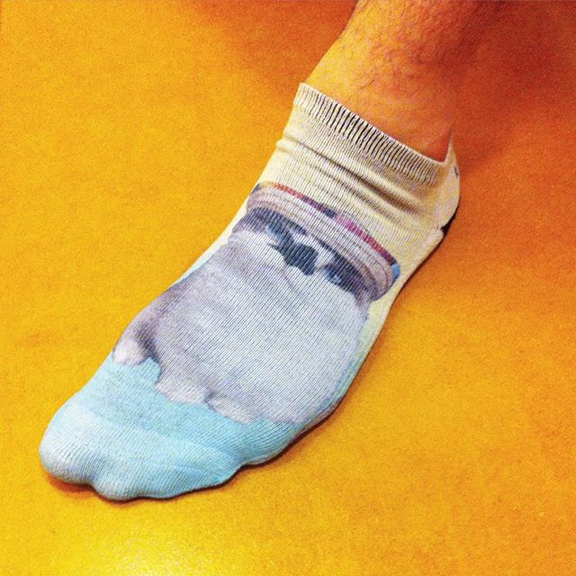 What a beautiful portrait of @albertbabycat — so realistic I can't believe it's a sock! #whatthefuckisthisshit #madeinchina #catsploitation