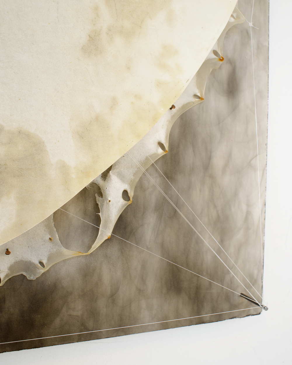 Moon Infinitum, (detail) Smoke,  Beeswax, Bone, music wire & oil paint on Whole Calf skin. (1 mtr square), 2014
