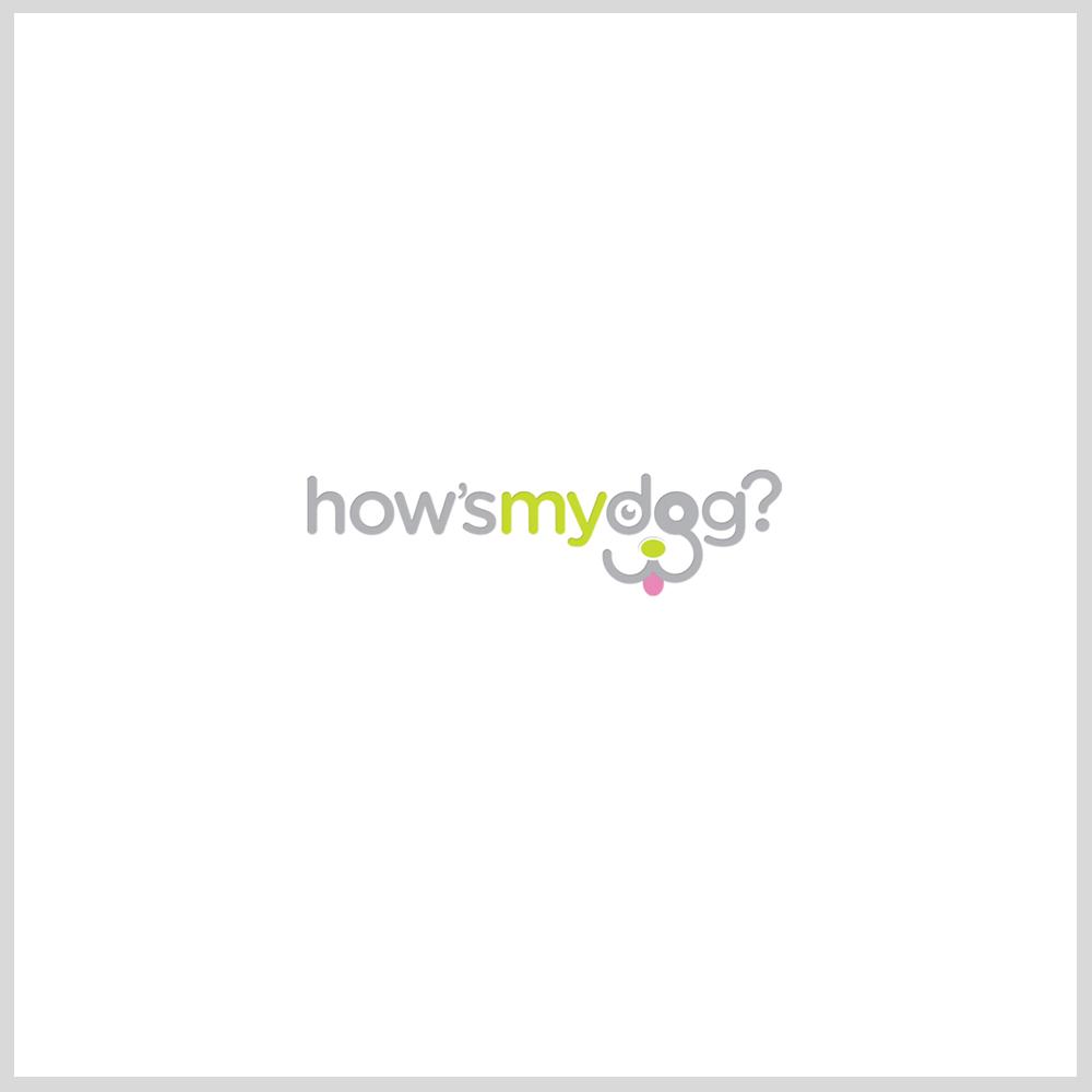 How'sMyDog.jpg