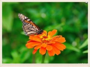 butterfly-9a.jpg